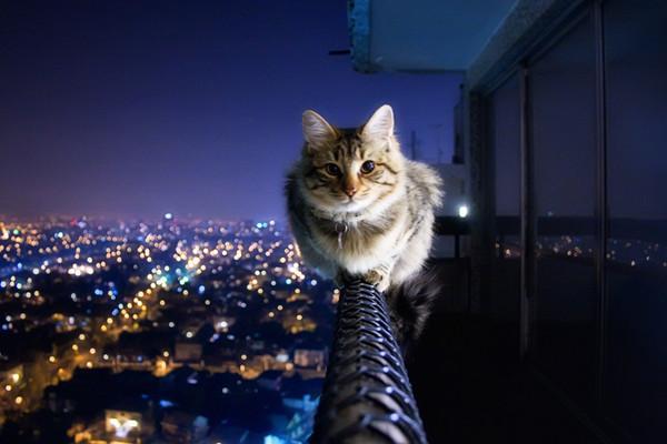 バランス猫image