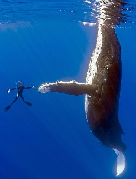 クジラさんと人image