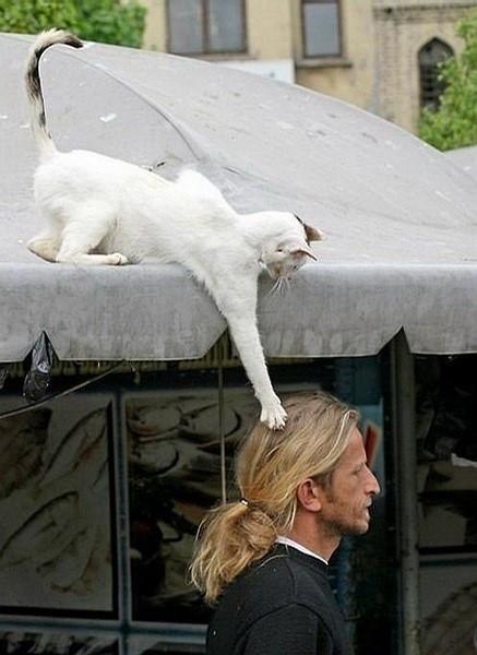 なんだコイツは的な猫のimage