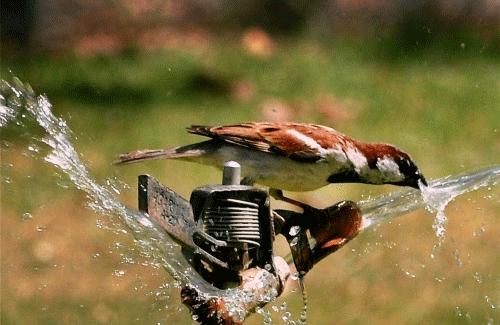 水を飲む鳥さんimage