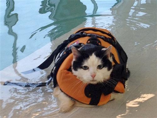 ライフジャケット猫image