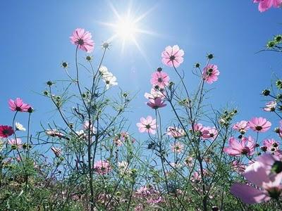 花と空のimage
