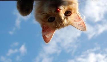 逆さでのぞく猫image