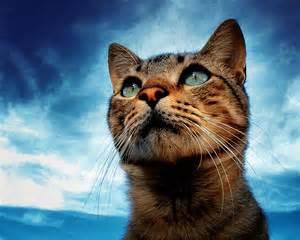 見上げる猫image