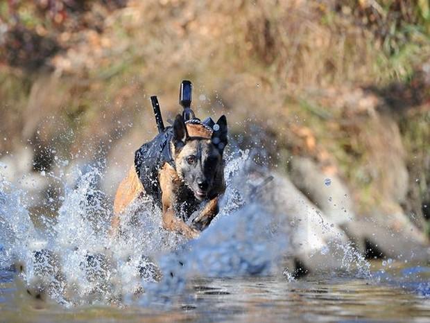 軍用犬2image