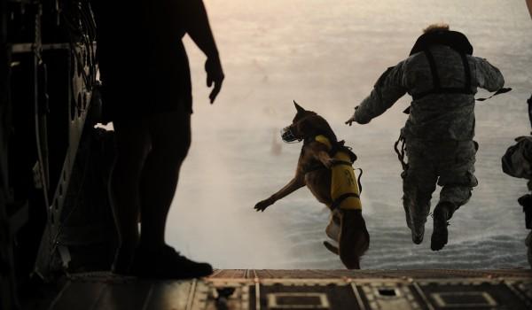 兵士と犬8image