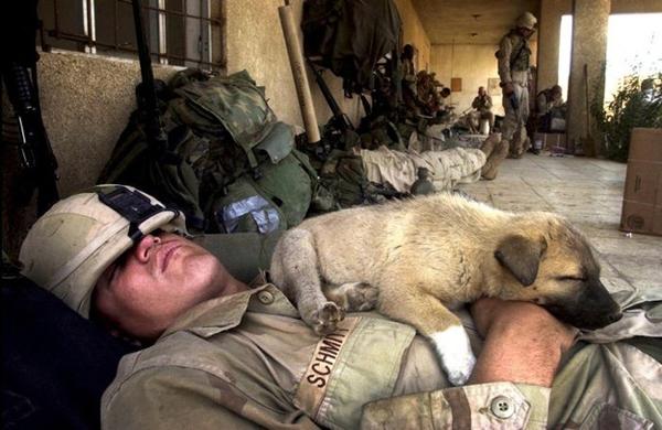兵士と犬7image