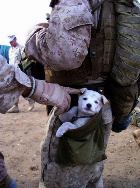 兵士と犬image
