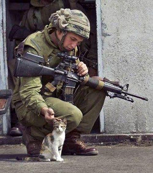 兵士と猫3image