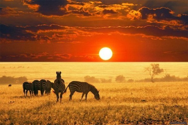 大自然と太陽のimage