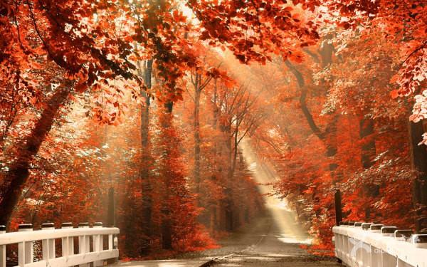 秋の紅葉なimage