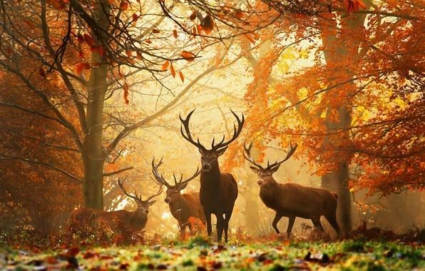 秋の森のimage
