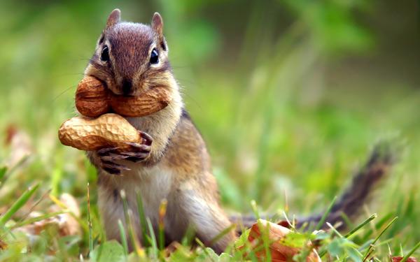 ピーナッツとリスのimage