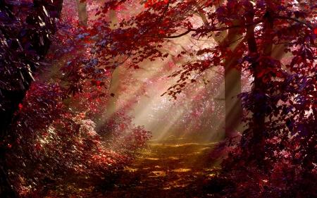 幻想の森のimage