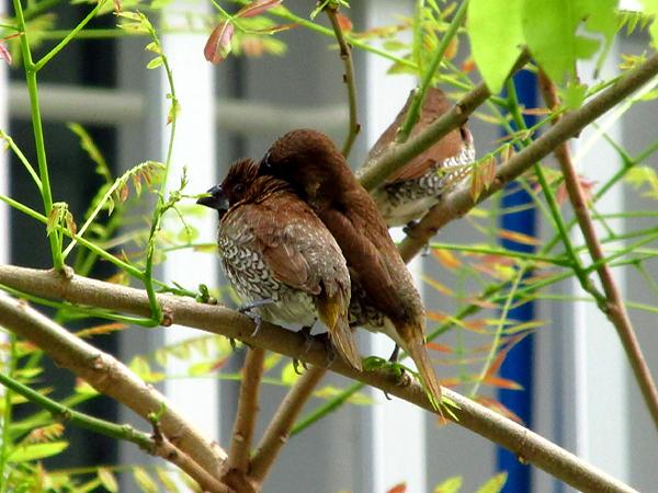 都会の木で休む鳥のimage
