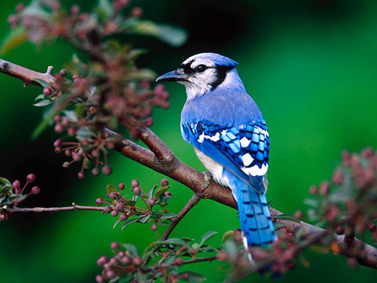 木々の小鳥のimage