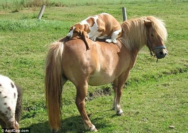 馬の背中で昼寝のimagejpg