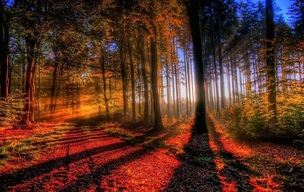 秋の風景のimage