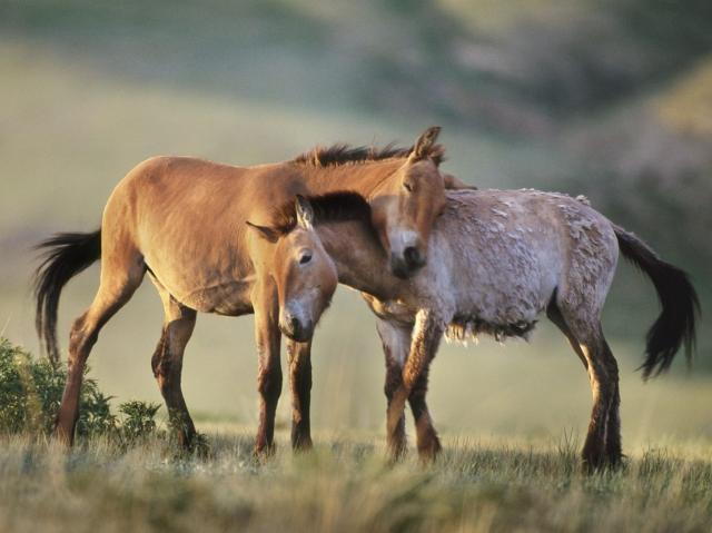 野性の馬の恋人たちのimage