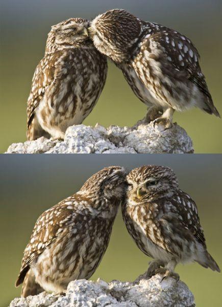 あにまるキスの2image