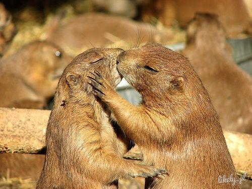 あにまるキスのimage