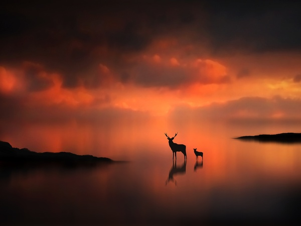 幻想のような鹿さん親子のimage