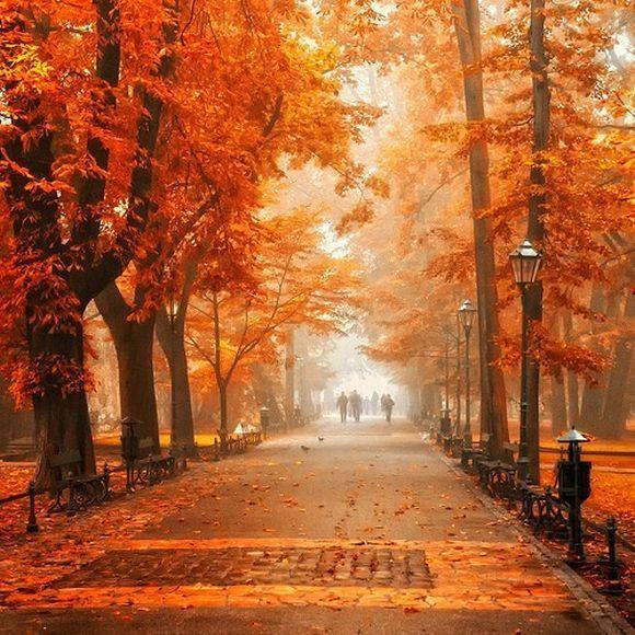 秋の歩道のimage