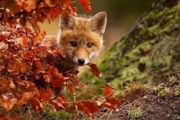 秋の風景と子ギツネさんのimage