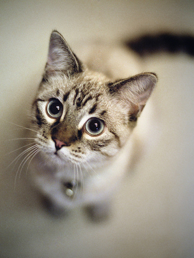 見上げてくる猫のimage