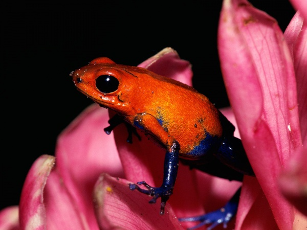 美しい毒カエルさんのimage