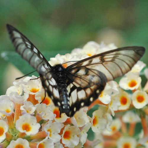 美しい蝶々な2image