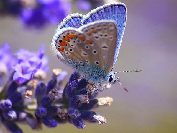 美しい蝶々なimage