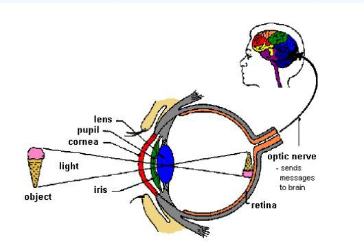 目の画像の結び方のimage