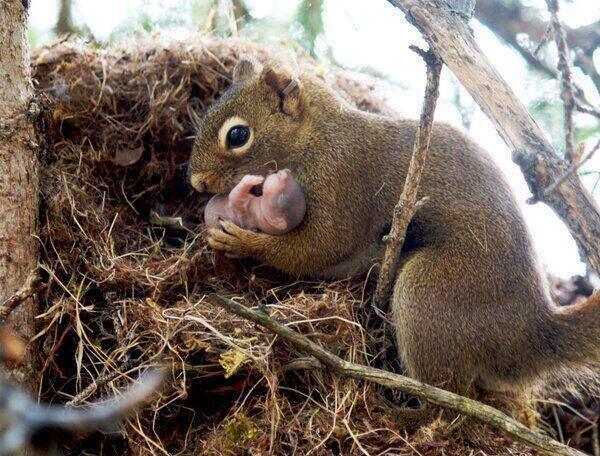 リスさんと赤ちゃんリスのimage