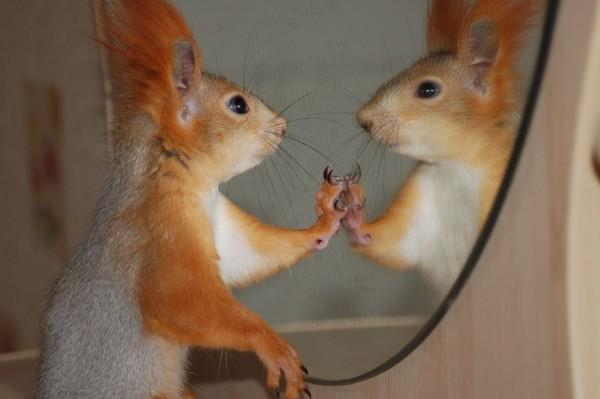 リスさんの鏡よ鏡なimage