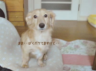 ボケたりっくん(=^△^=;)