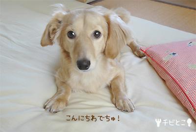 りっくんからごあいさつ(=^△^=)
