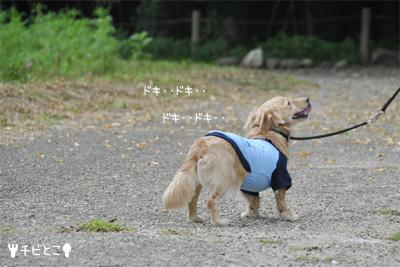 お散歩りっくん(=^△^=)