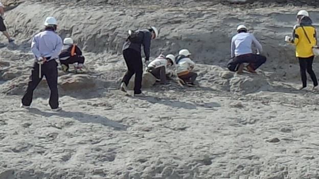 アンモナイトセンター(化石発掘体験)2013,4,14⑩