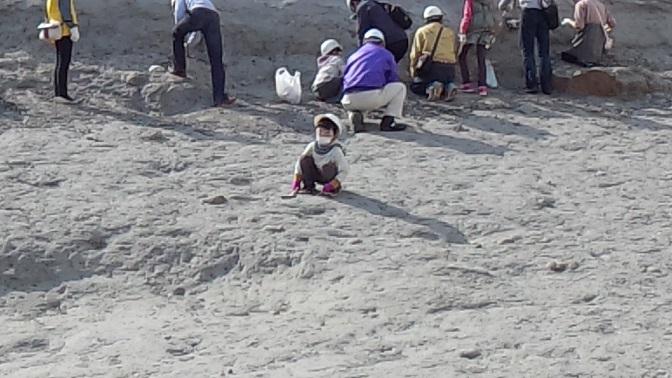 アンモナイトセンター(化石発掘体験)2013,4,14⑪