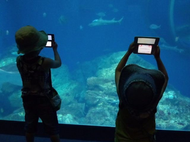 2013-8-5 水族館20