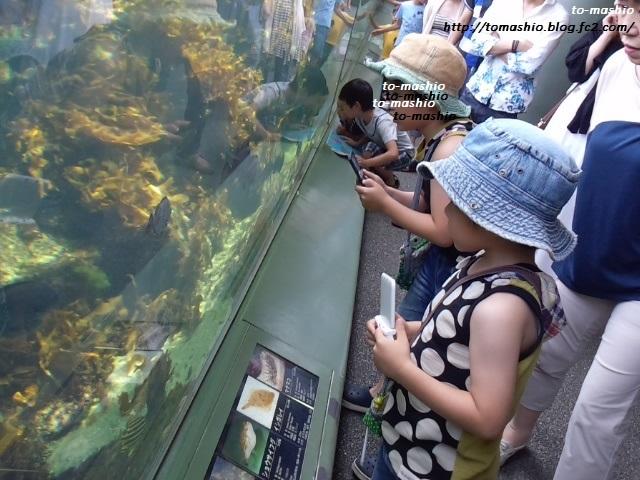 2013-8-5 水族館21