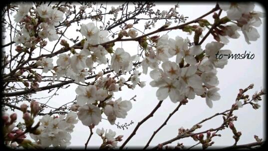 fc2_2013-03-27_21-54-18-522.jpg