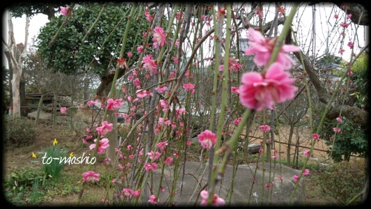 fc2_2013-03-27_21-56-37-140.jpg