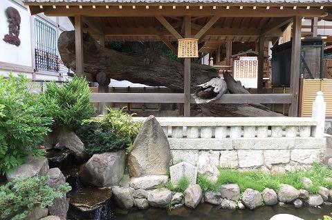 須磨寺 (54)