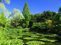 250px-Kitagawa_Monet_Marmottan_Water_garden_1_convert_20110926212801.jpg