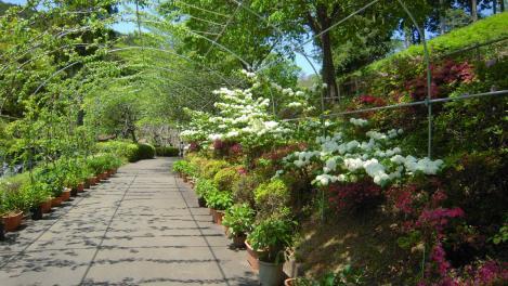 植物観光地の花のトンネルをデジカメ撮影でデジカメ写真画像