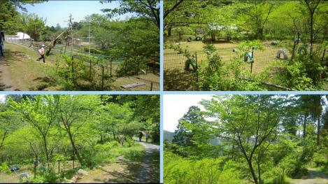 森林浴を楽しみながら散歩してる風景をデジカメ撮影でデジカメ写真
