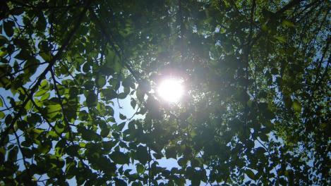 森林浴の散歩中に撮った太陽のまなざしの光をデジカメ撮影写真