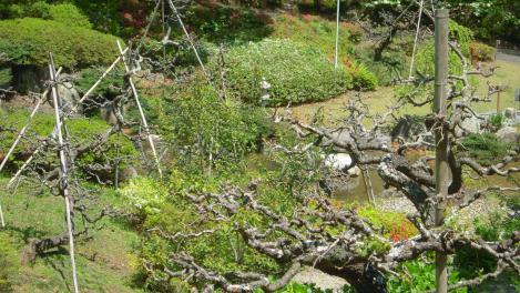 自然に囲まれた森林浴の芸術的な光景をデジカメ撮影で撮りました